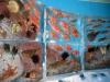 ledyanoy-akvarium-v-yaponii-4