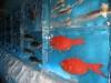 ledyanoy-akvarium-v-yaponii-5