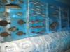 ledyanoy-akvarium-v-yaponii-6
