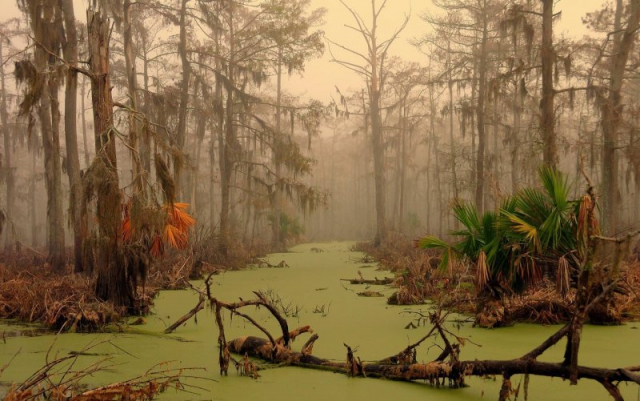 monciak_swamp_in_louisiana-1