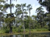 monciak_swamp_in_louisiana-3