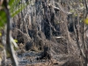 monciak_swamp_in_louisiana-4