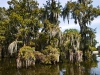 monciak_swamp_in_louisiana-6