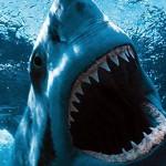 В США акула напала на туриста