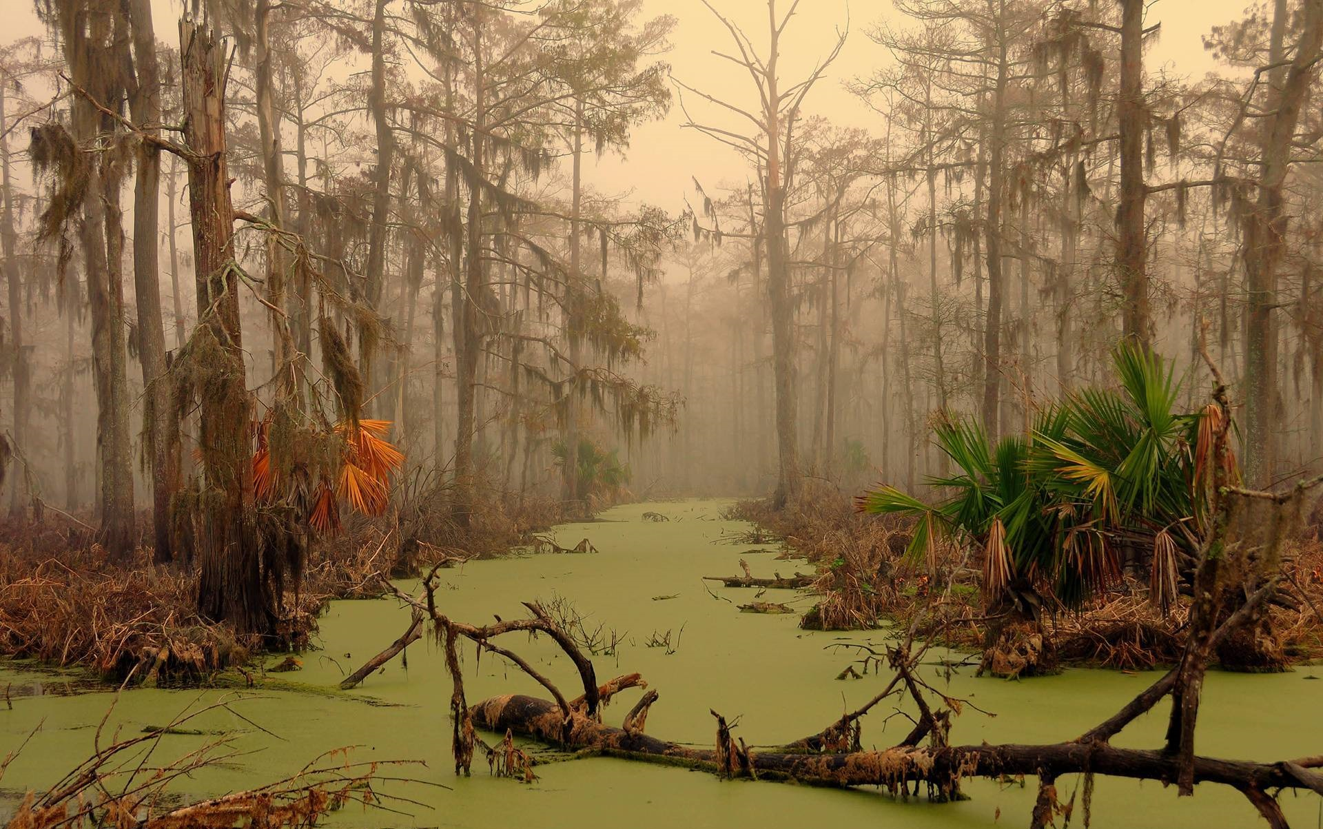 monciak_swamp_in_louisiana (1)