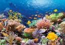 В Испании у берегов Таррагоны построят искусственные рифы