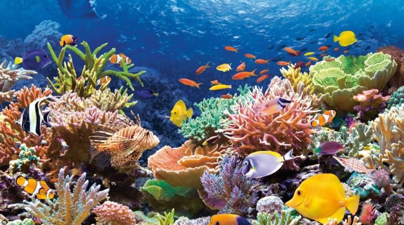 Рифы у берегов Испании
